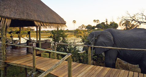 luxury-hotels-botswana-mombo-little-mombo-camp-slide-2_sm