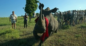 Rhinos_Without_Borders_Feb_2015_CBS5997 copy (1)