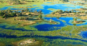 Aerial-view-of-the-Okavango-Delta-during-its-annual-flood.-Image-by-Kelly-Cheng-Travel-Photography-Getty-Images