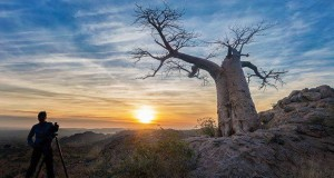 Baobabs-and-Boulders