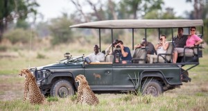 CHITABE_Dave-Hamman-Game-drive-and-Cheetahs1