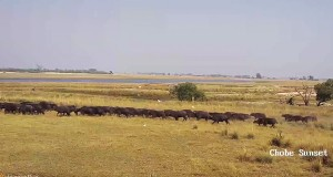 Puku Flats - Western floodplains