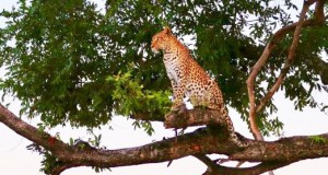 Pula_Wilderness-Safaris-Mombo