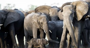 Wilderness-Safaris-Qorokwe_Newborn-Baby-Elephant-at-Qorokwe_Marius-Coetzee