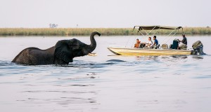 Wilderness-Safaris_Family_Savuti_Botswana-2